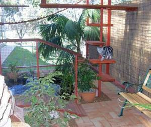 cat_enclosure